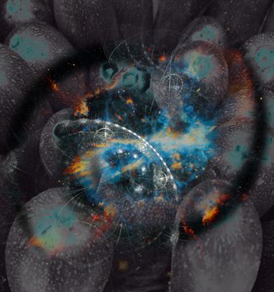 spiralize-story-alt1
